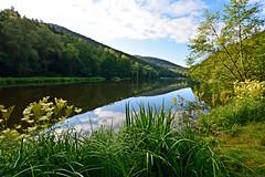 Quand la nature s'panouit sur mon Petit Coin de Paradis (Excalibur67) Tags: trees nature forest nikon sigma arbres reflexion reflets eaux tangs d7100 vosgesdunord forts ex1020f456dchsm