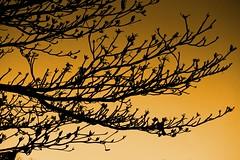 Linhas e Curvas (Angelohdf) Tags: life folhas contraluz photo vida novas galhos pensamento