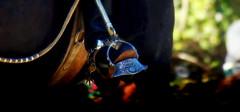 Dominguera (Eduardo Amorim) Tags: horse southamerica argentina argentine caballo cheval spur sperone pferde cavallo cavalo gauchos pferd ayacucho pampa loro riendas apero gaucho cavall staffa  amricadosul loros stirrup platera gacho estribo amriquedusud provinciadebuenosaires  recado gachos  sudamrica esporas suramrica amricadelsur sdamerika espora  pilchas espuelas buenosairesprovince pilchasgauchas steigbgel recao pampaargentina americadelsud plateracriolla espuela americameridionale rdeas eduardoamorim estribera estrivo trier pampaargentino