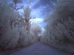 Trail Infrared (Costigliola Michele) Tags: city italy color foglie ir strada italia nuvole fuji trail infrared napoli naples fujifilm michele sentiero azzurro bianchi citta campi filtro 760 vegetazione infrarosso montediprocida flegrei fogliame costigliola x100s