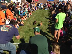 """Wauktoberfest 2015 • <a style=""""font-size:0.8em;"""" href=""""http://www.flickr.com/photos/123920099@N05/21548396348/"""" target=""""_blank"""">View on Flickr</a>"""