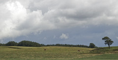 Grnbete, Pasture, open fields in the countryside of Sweden (slogg) Tags: green cattle pasture
