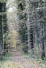 IMG_3209-Modifier (mycenium) Tags: wood mushroom canon belgium region foret brabant champignon bois 6d wallon wallonie wallone belgiquie