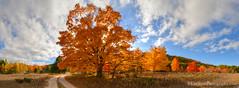 Color Tour ... two track (Ken Scott) Tags: autumn panorama usa fall october michigan fallcolors lakemichigan greatlakes dirtroad mapletree freshwater voted leelanau colortour twotrack 2015 45thparallel fhdr sbdnl sleepingbeardunenationallakeshore mostbeautifulplaceinamerica