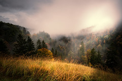 Autumn Colors (roikarool) Tags: autumn trees cloud fall colors grass fog landscape gold haze nebel g herbst wolken gras mm 20 18 landschaft bume cloudscape farben d800 dunst wolkenlandschaft