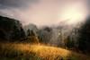 Autumn Colors (roikarool) Tags: autumn trees cloud fall colors grass fog landscape gold haze nebel g herbst wolken gras mm 20 18 landschaft bäume cloudscape farben d800 dunst wolkenlandschaft