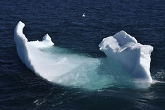_DSC9186 (TC Yuen) Tags: glacier arctic greenland whales iceberg crusing floatingice polarregion greenlandeast