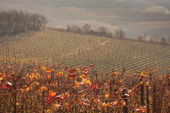 Langhe (Marco Bogliatto) Tags: bar novembre alba cuneo autunno vigne paesaggio vino barolo barbera langhe langa vigneti dolcetto