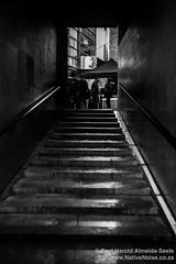 Stairs to Sinéad. Dublin, Ireland