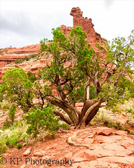 Vortex Tree, Sedona (KPlath) Tags: red tree rocks hiking sedona