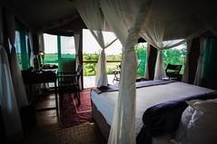 Image 19-11-15 at 15.37 (2) (goingafricasafaris) Tags: camp plains duba