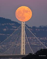 Super Moon (davidyuweb) Tags: super moon supermoon luckysnapshot sfist san francisco bay bridge