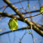 Schwalingen - im Frühling thumbnail