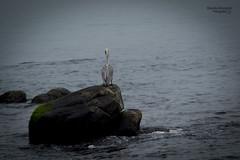Solo en la Tempestad (ricardo.almonacid) Tags: animal mar ave solo soledad pajaro veracruz solitario
