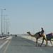 doha camel race (45)