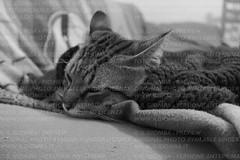 Che freddo! (IlGiomba) Tags: cats fusa gattini animalidacompagnia