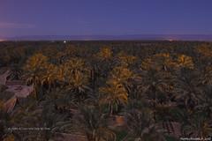 Al chiaro di luna nella valle del Draa (Matteo Rinaldi.it) Tags: marocco notturna datteri valledeldraa
