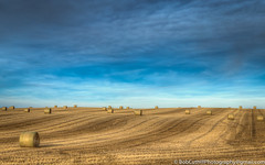 Hay Bales (westrock-bob) Tags: county morning copyright canada field canon eos scenic bob ab bluesky alberta crop round hay agriculture bale stubble 6d cuthill canon6d kneehill canoneos6d bobcuthillphotographygmailcom bobcuthill bobcuthillphotography