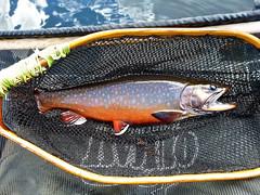 P1020579-2.jpg (Upstate Dave) Tags: activity adirondacks brooktrout fish fishing flyfishing newyorkstate trout 2015