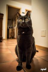20151207 - Prova D750 (LOW) 04 (DAVIDE SPAGNA SPD) Tags: cats cat nikon d750 gatto gatti tamaron