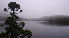 Lake Osborne (Rotuli) Tags: pine king hiking tasmania billy wilderness cupressaceae endemic lakeosborne hartzmountainsnationalpark athrotaxisselaginoides kingwilliampine