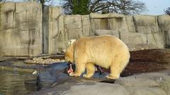 365/365 Bear's gotta eat
