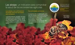 Las Abejas (Corporacin Autnoma Regional del Guavio) Tags: car corpoguavio corporacinautnomaregionaldelguaviocorpoguavio agua colombia cundinamarca comprometidos asocars minambiente abejas conservacin paz