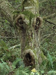Forest Ghoul (unkleD) Tags: tree face woods forest deformed character gnarled twisted