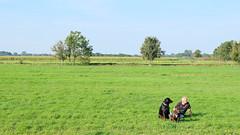 (Lin ChRis) Tags: 羊角村 荷蘭 旅 trip travel giethoorn holland netherlands man dog green