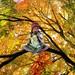 Girl in a Fall Tree