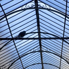 A Roof Over My Head (Dan Daniels) Tags: birds audand alsace mulhousealsacefr france nikon skylights roofs