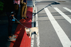 Good dog! (Cedpics) Tags: nyc newyorkcity dog pet street leash usa