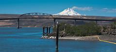 A bird, a bridge and Mount Hood (maytag97) Tags: oregon mounthood mthood landscape bridge river columbiariver tamron 150 600 150600 samhillmemorialbridge