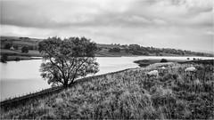 Hury Reservoir . (wayman2011) Tags: canon50d lightroom wayman2011 bwlandscapes mono reservoirs trees pennines dales baldersdale teesdale huryreservoir countydurham uk
