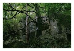 . (-klik-) Tags: woods forest tree trees