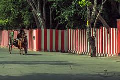Palani ,Tamil Nadu, India. (Bharani Eswaran) Tags: india horse palani tamilnadu travelphotogrsphy travel culture indianculture canon canon60d