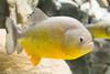OdySea Aquarium-3031 (rob-the-org) Tags: odysea aquarium scottsdaleaz f50 51mm 120sec iso3200 uncropped noflash