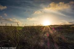 Sunset (Sony_Fan) Tags: 2016 nordsee holland niederlande netherlands northsee dunes dune grass light gras sonne thomas umbach sun sonfan sony rx 100 wolken clouds abendlicht outdoor stimmung stimmungsvoll urlaub holidays vacation europa europe flickr landcape sunset dreamlight