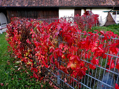 Fall Colours 1.0 (tatiana.minori) Tags: autumn nature landscape outside fall germany country feeling village bodensee lake constance