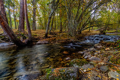 Rio Eresma (KitosRD) Tags: forest river otoo rio bosque rios autumn fujifilm fuji segovia nd4 eresma samyang12mm fujixt10