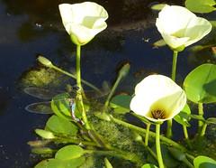 Orto Botanico, Palermo, Sicily (ajhammu0) Tags: ortobotanico palermo sicily