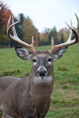 Parc Omega (jeanette.alexiuk) Tags: parcomega nature animal animals fall leaves landscape canada ontario parc