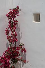 DSC01596_s (AndiP66) Tags: agiosstefanos egeo griechenland gr rocabellaarthotel mykonos greece kykladen cyclades aussicht view juni 2015 hellas ellada sony sonyalpha 77markii 77ii 77m2 a77ii alpha ilca77m2 slta77ii 18270mm tamron andreaspeters