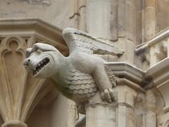 Chubby Dragon Gargoyle, York Minster (Aidan McRae Thomson) Tags: york minster cathedral yorkshire gargoyle