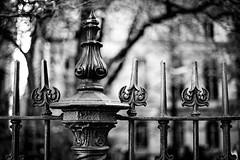 Detail of Bostonian Fence (WilliamND4) Tags: hff fencefriday fence nikond750 50mm blackandwhite blackwhite monochrome bokeh