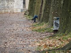 Legs (schauplatz) Tags: deutschland tbingen alley avenue parkway park allee beine legs bin mlleimer
