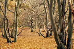 The Fall Of Autumn (UKInfluence) Tags: landscape canon 700 d 700d autumn leaf leaves orange brown earth trees