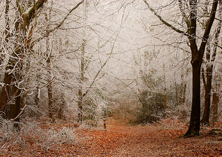 Another hard frost......