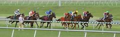 "2015-07-26 (4) r7 Jim gets a shot (JLeeFleenor) Tags: photos photography md laurelpark jockey جُوكِي ""赛马骑师"" jinete ""競馬騎手"" dżokej jocheu คนขี่ม้าแข่ง jóquei žokej kilparatsastaja rennreiter fantino ""경마 기수"" жокей jokey người horses thoroughbreds equine equestrian cheval cavalo cavallo cavall caballo pferd paard perd hevonen hest hestur cal kon konj beygir capall ceffyl cuddy yarraman faras alogo soos kuda uma pfeerd koin حصان кон 马 häst άλογο סוס घोड़ा 馬 koń лошадь marylandracing racing marylandhorseracing photographer maryland"