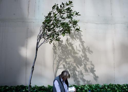 Curios tree